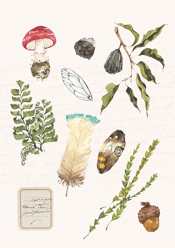 森林採集明信片 - 蝴蝶與紅蘑菇